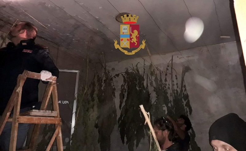Sequestrate 50 piante di marijuana: erano in un ex edificio scolastico